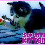 Seis Pequeños Gatitos